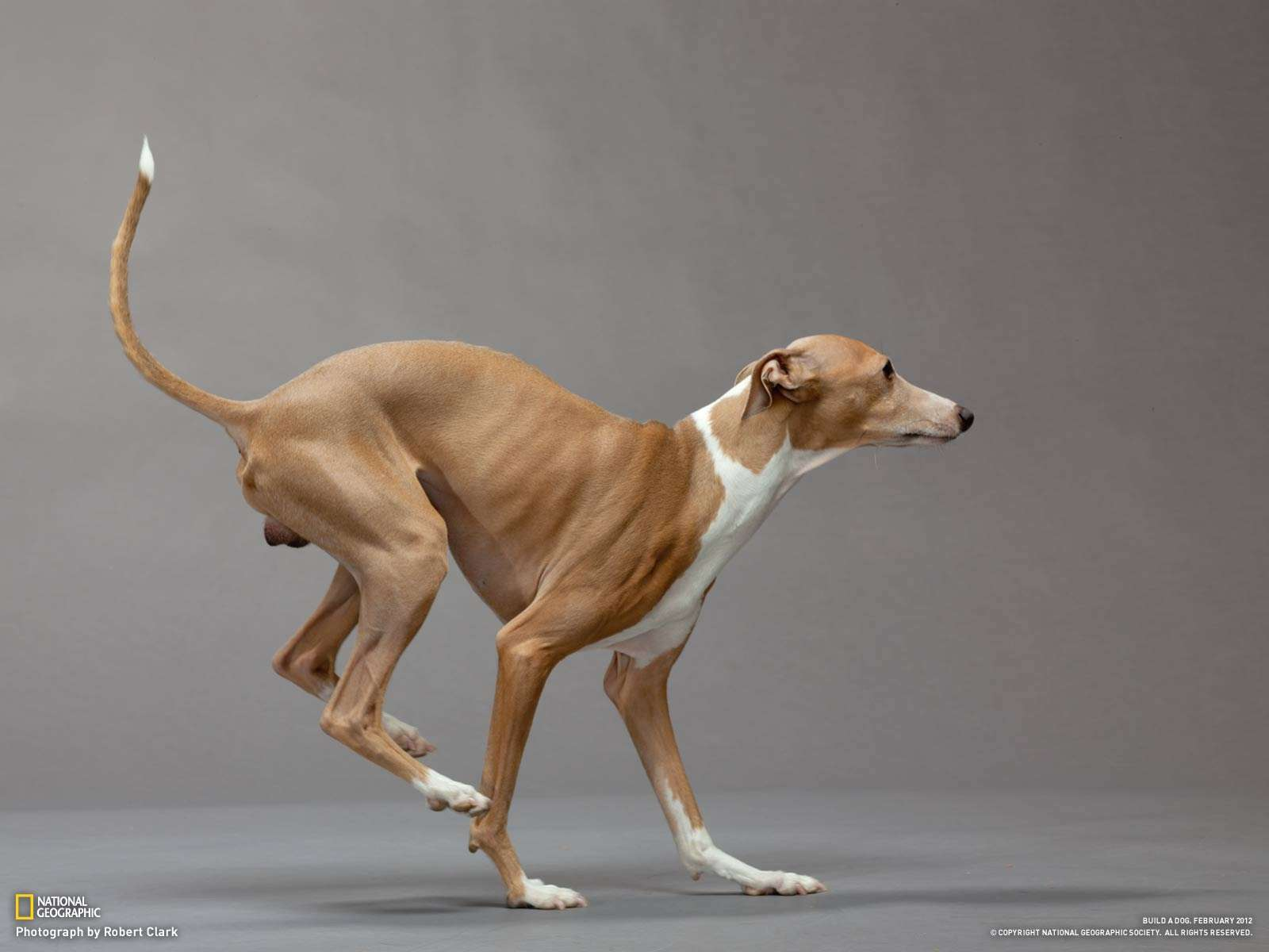 Best Mixed Breed Dogs For Running