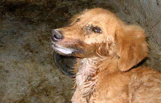 Собака, больная бешенством, фото болезни домашних и диких животных фотография картинка