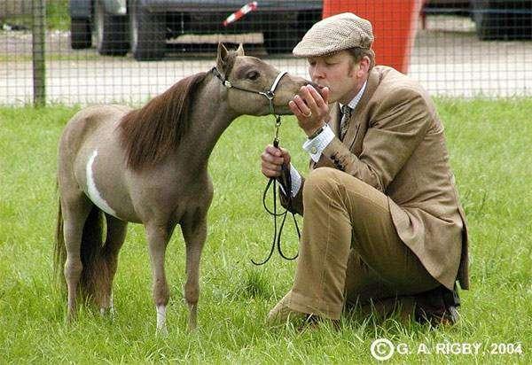 мини лошадь фото: