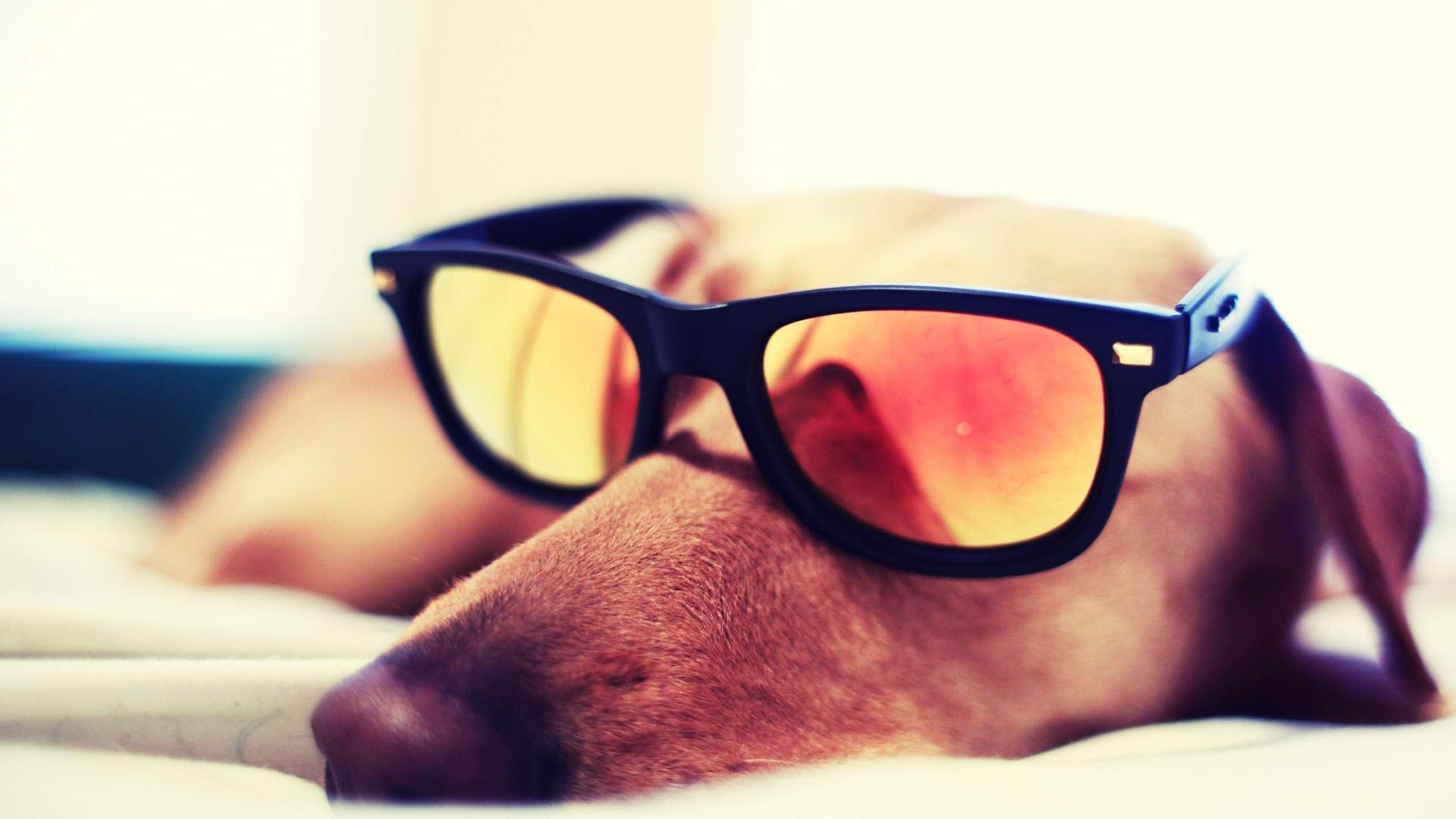 собака парик перчатки очки бесплатно