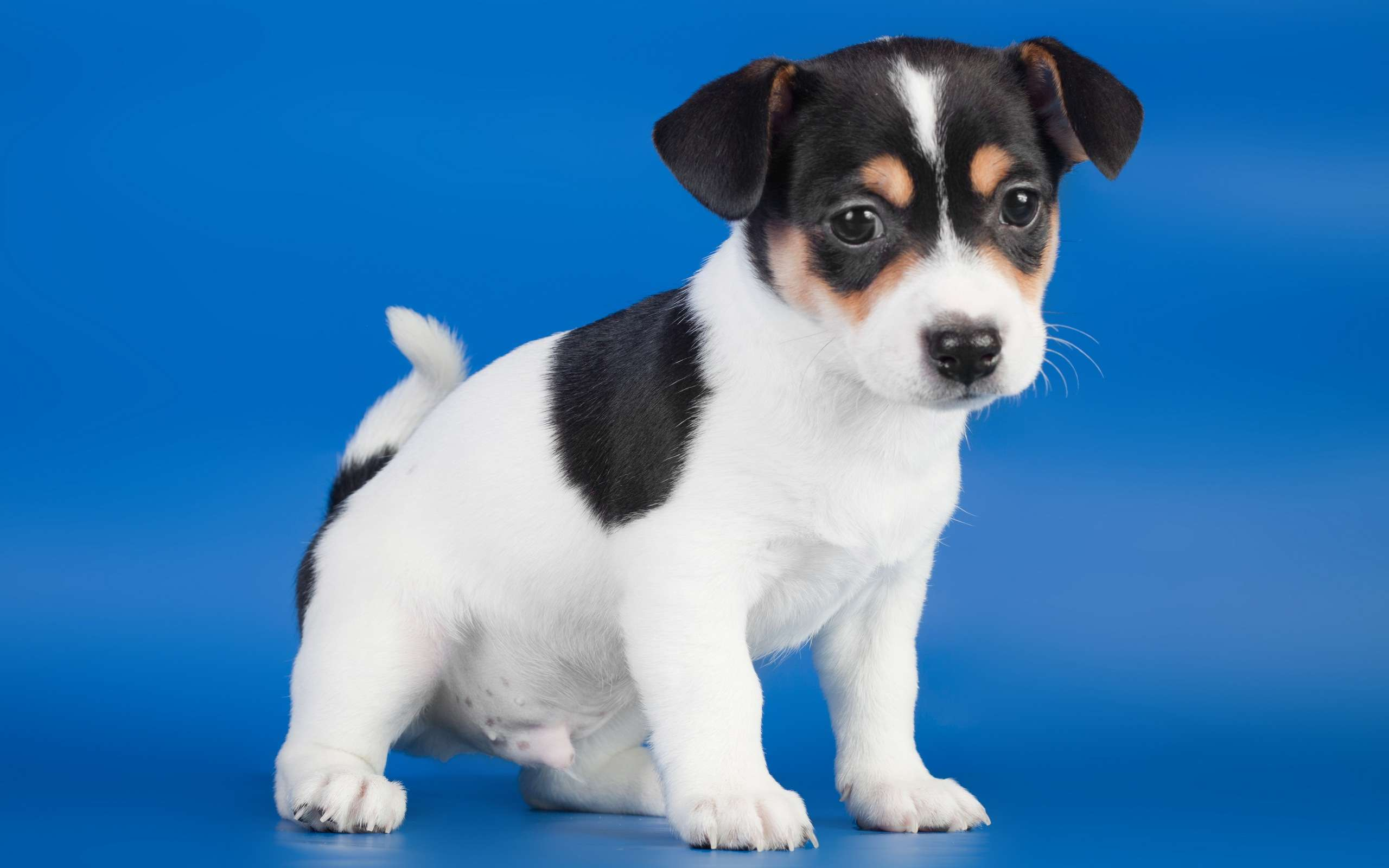 chat gratuite sans inscription Lyon