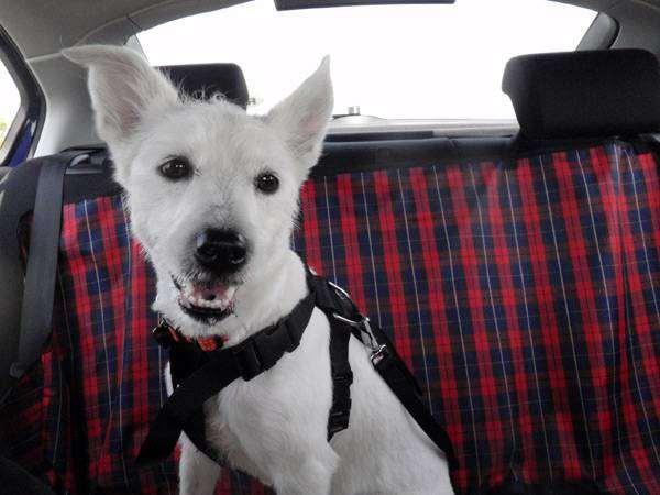 Собака в машине, фото путешествия с собаками фотография