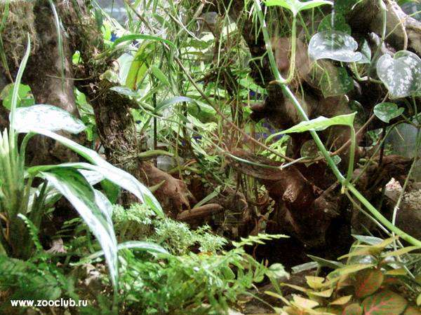 Террариум для рептилий, крокодилов, фото рептилии пресмыкающиеся фотография картинка
