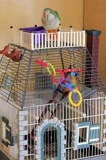 Клетка для птиц и попугаев, фото содержание птиц в неволе фотография картинка