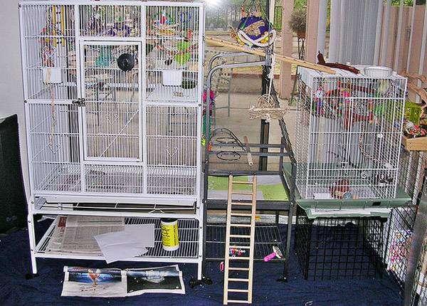 Клетки для птиц, фото содержание птиц попугаев фотография картинка