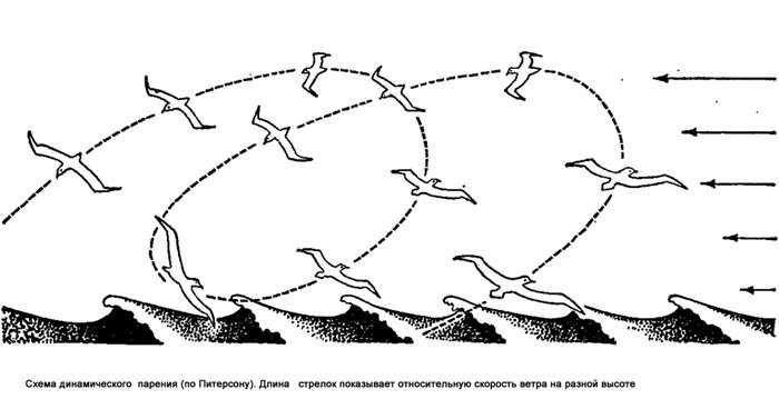 Схема динамического парения