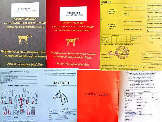 Паспорта лошади, фото лошади фотография