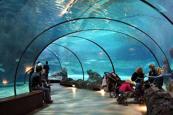 Океанариум Роттердамского зоопарка, фото новости о животных фотография