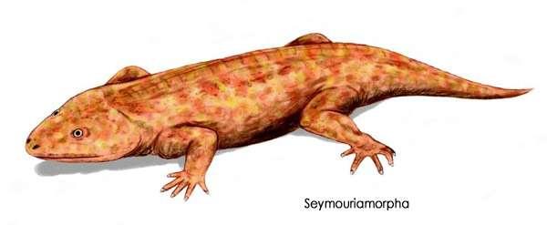 Примитивное пресмыкающееся (Seymouriamorpha), рисунок доисторические вымершие животные картинка