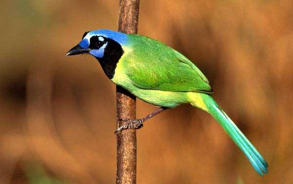 Красивая птичка, фото фотография картинка птицы