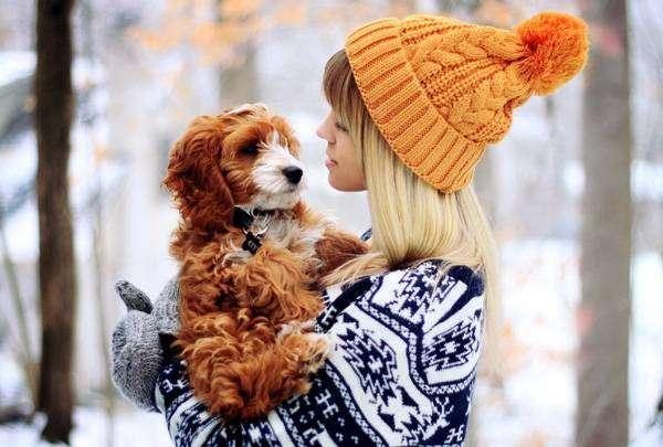 Девушка и рыже-белый щенок, фото фотография собаки картинка