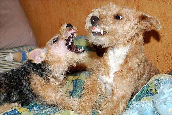Драки между собаками