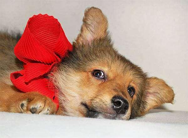 Щенок, фото выращивание щенка фотография