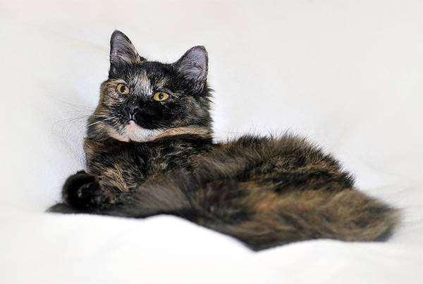 Кошка, фото кошки фотография