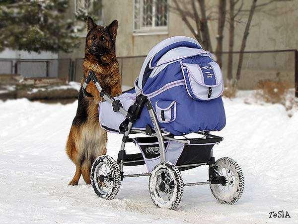 как знакомить собаку с новорожденным