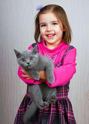 Девочка и котенок, фото фотография кошки породы кошек
