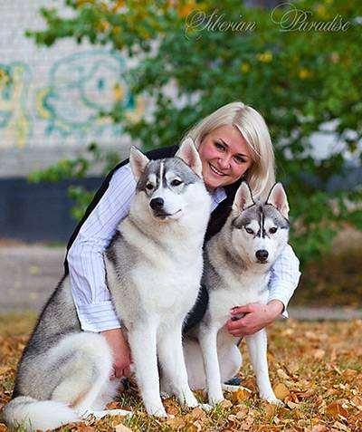 Сибирские хаски, фото собаки картинка