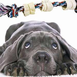 Профилактика зубного камня у собак, продукция компании TiTBiT