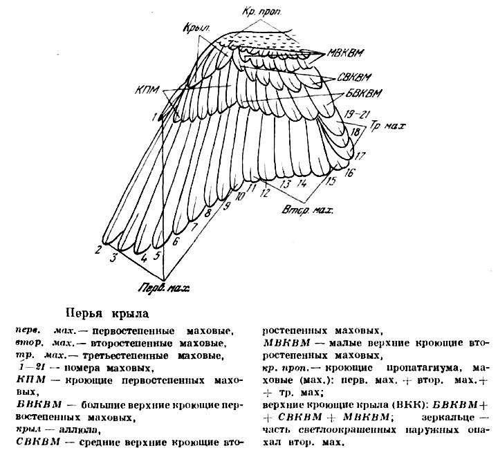 картинка рисунок схема