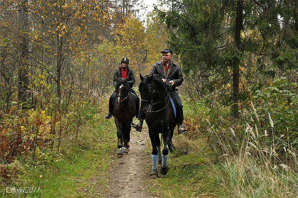 Прогулка на лошадях, фото конный спорт фотография