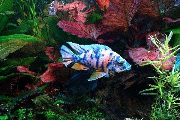 Неудачи в начинающих аквариумистов, температура тела ...: http://www.zooclub.ru/aqua/106.shtml
