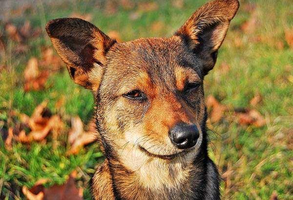 Дворняжка, фото о собаках фотография