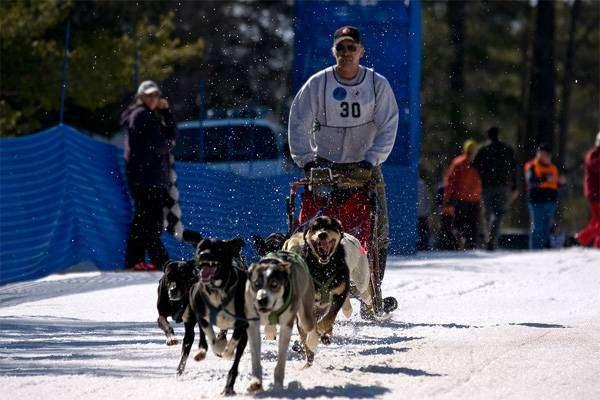 Еврохаунды в упряжке, собачьи гонки, фото породы собаки фотография