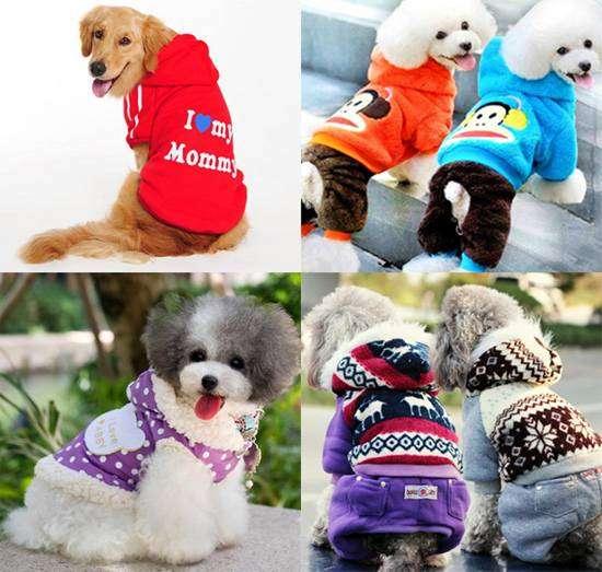 Одежда для собак, фото фотография картинка