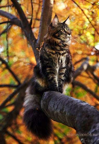 http://www.zooclub.ru/attach/14000/14667.jpg