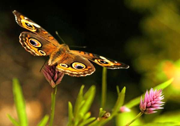 Бабочка на цветке, фото членистоногие фотография