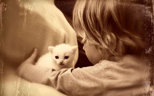 Девочка и белый котенок, фото фотография новости о кошках