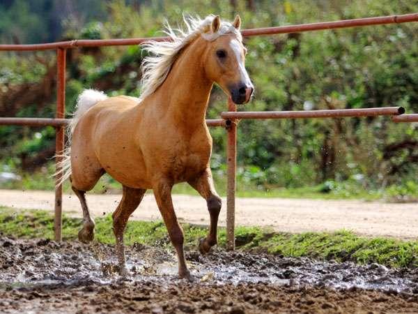 Лошадь, фото новости о лошадях фотография
