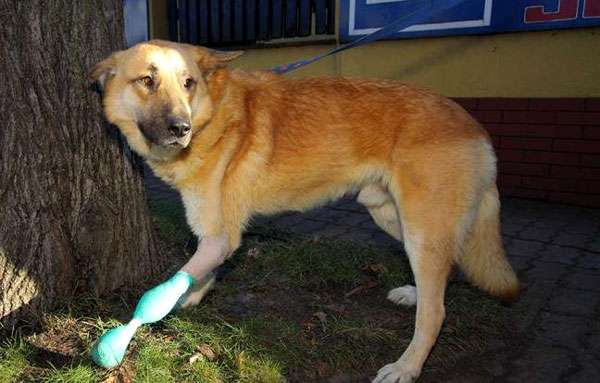 Пес Рекс, фото новости о собаках фотография