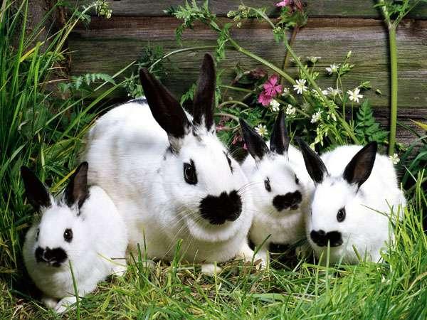Кролик бабочка с крольчатами, фото вопросы о кроликах фотография