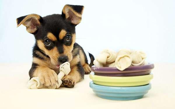 Щенок с косточкой из жил, фото собаки фотография