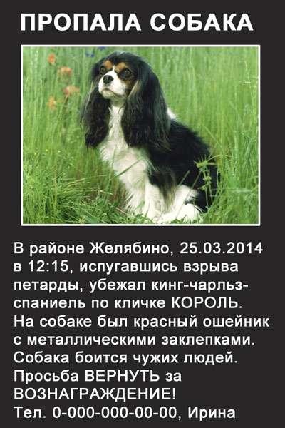 Подать объявление собака доска объявлений тарко-сале сале