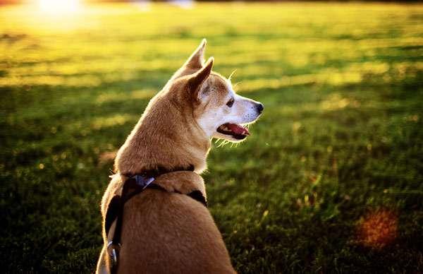 Одинокая потерявшаяся собака, фото собаки фотография