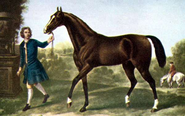 Чистокровный арабский скакун Дарли Арабиан, рисунок картинка лошади