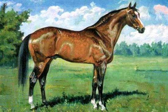 Жеребец Анилин, рисунок картинка лошади