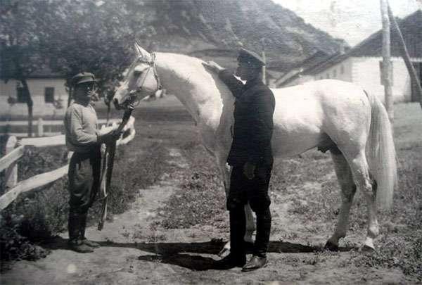 Арабский жеребец Песняр, фото лошади фотография
