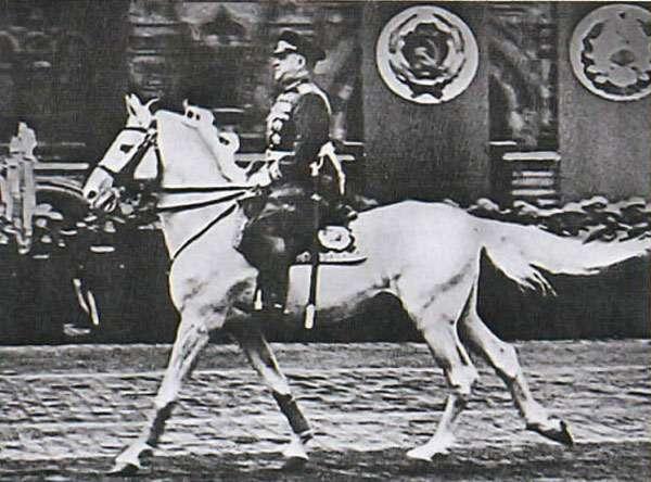 Конь Кумир, фото фотография изображение