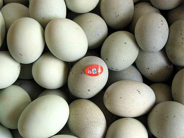 Утиные яйца, яйца утки, фото консультации по домашней птице фотография