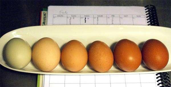 Разноцветные яйца кур, фото консультации по домашней птице фотография