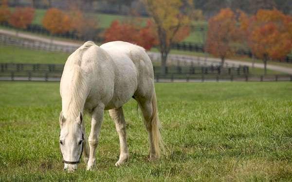 Лошадь на поле леваде, фото кормление лошадей фотография картинка