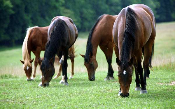 Лошади на пастбище, фото фотография картинка