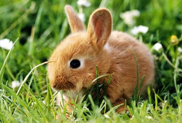 Овощи в рационе кролика, Овощи в рационе кролика фото, какие овощи растения можно давать кроликам? что нельзя скармливать кормить давать кролику? овощи для кроликов
