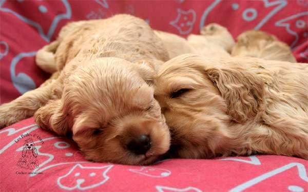 какие документы должны быть при покупке собаки