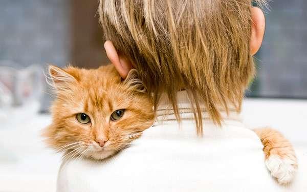 Кошка и мальчик, фото домашние кошки фотография