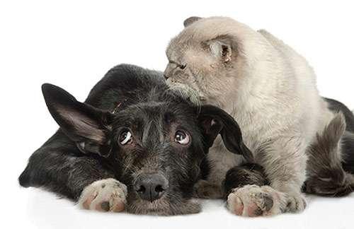 Кошка и собака, фото болезни гельминты у собак кошек фотография