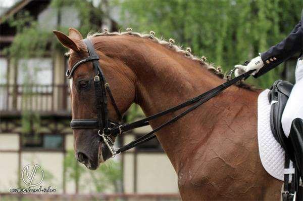 Лошадь фото фотография